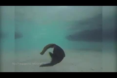 تصاویر عجیب که از ماهی که سرش از تنش جدا شده و زنده است