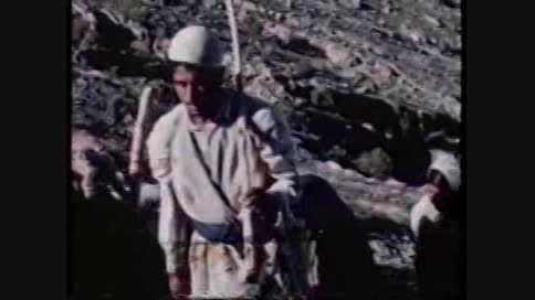 فیلم بلوط اثر دکتر نادر افشار نادری
