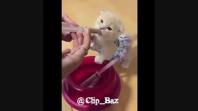 غذا دادن یا شیر دادن به بچه گربه ی تازه متولد شده دیدنی