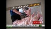تولید مازاد مرغ، عامل ورشکستگی مرغداران