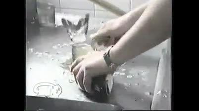پوست کردن و پاره کردن شکم و سرخ کردن و خوردن ماهی زنده