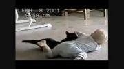 بازی بچه با گربه خخخخخخخخ