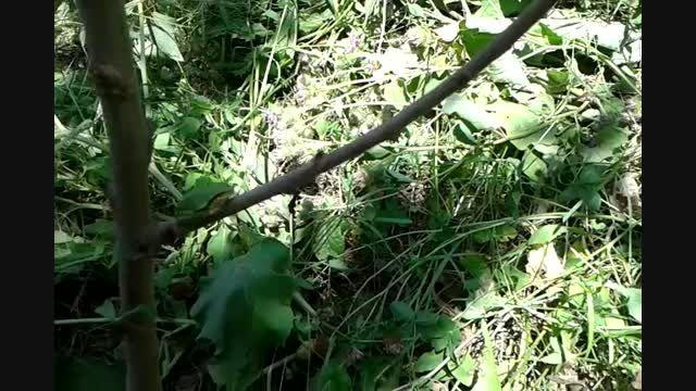 غذا دادن به قورباغه درختی ( YAD )