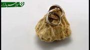 حلقه ازدواج نقره طرح هستی - کد 3280