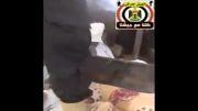 اسیر شدن تکفیری وهابی داعش در دستان عراقی ها