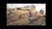 کلیپ تقابل پسر روستایی و پسر شهری در روستای دافچاه