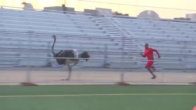 مستند علم ورزش - رقابت انسان با شترمرغ در مسابقه دو