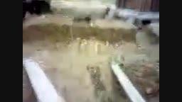 تصاویری از قبر مطهر امام حسین ع قبل از تعویض ضریح مقدس