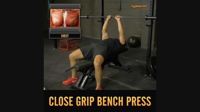 تمرین عضلات سه سر (پشت بازو) و عضلات سینه(organfit.ir)