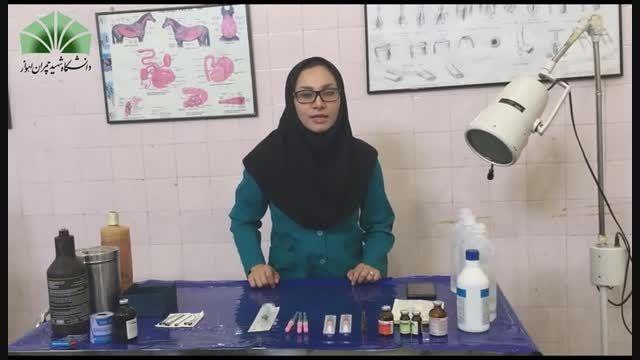 آموزش بی حسی اپیدورال در گاو ( دامپزشکی )