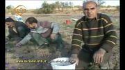 زعفران ایران 1