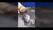 سگ یا داعش؟! کدام دل رحم تر است؟!