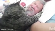 گربه های هشدار دهنده ساعت