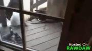 دفاع گربه از صاحبش در برابر خرس گریزلی(گربه ی شجاع)