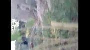 گروهک داعش در همدان
