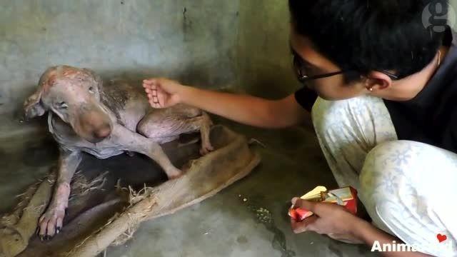 درمان سگ ولگرد
