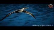 بزرگترین پرنده ای که زمین تاکنون به خود دیده است