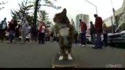 اسکیت بورد سواری حرفه ای یک گربه