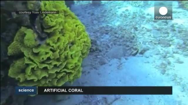 صخره های مرجانی