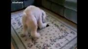 (خنده دار) سر کار گذاشتن سگها با لیزر....