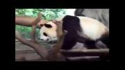 پربازدیدترین در دنیا!بمب خنده دارترین حیوانات بامزه کل دنیا