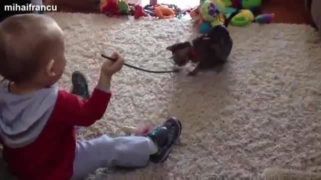 بازی بچه کوچولوهای بامزه با بچه گربه ها و توله سگها