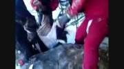 مرگ کوهنورد تهرانی