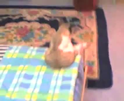 گربه ی افسرده خخخخ