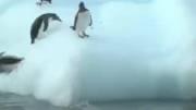مصائب پنگوئن ها ( طنز )