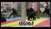 رسانه های ژاپن از نینجا های ایران میگفتند.