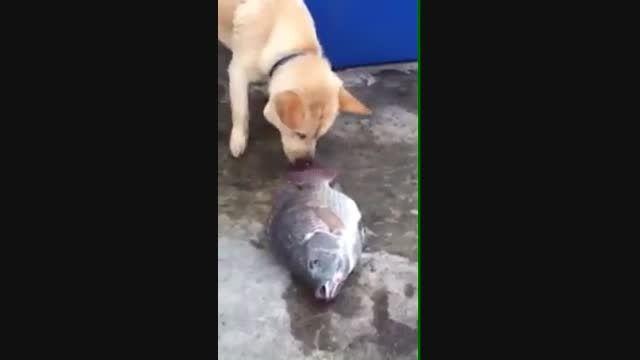 مهارت های زندگی ؛ همدلی ، سگ مهربان