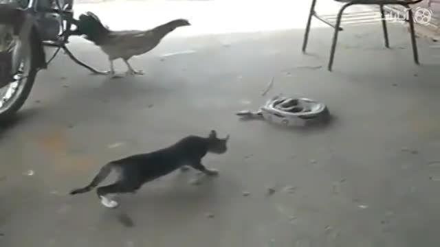 ترسیدن گربه از مار(خنده دار خنده دار خنده دار)