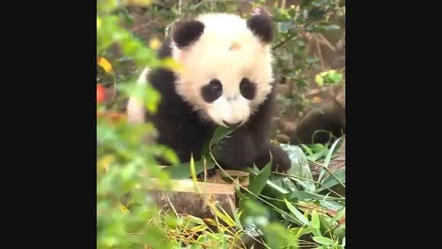 دوس داشتنی ترین موجودات دنیا!
