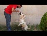 آموزش پارس کردن به سگ ها
