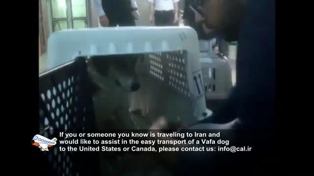 ملودی - از پناهگاه حیوانات وفا در ایران