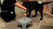 آموزش رانندگی به سگها