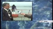 نخستین پرورش ماهی قزل آلا در قفس در گلستان