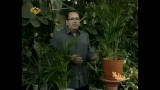 آشنایی و راهنمای نگهداری از گیاه نخل اریکا