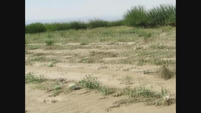 خسارت سیل به باغات و مزارع درگز (خراسان رضوی)