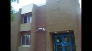 سقوط وحشتناک مرد از بالایه ساختمان!!