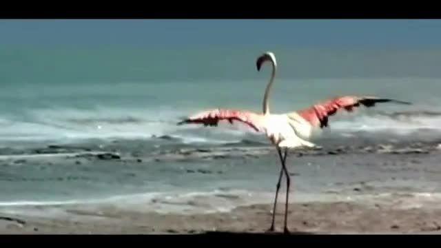 کلیپی زیبا درمورد دریاچه ارومیه و شهر ارومیه