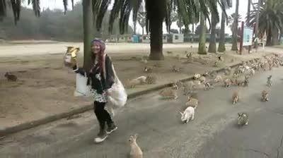 این همه خرگوش تا حالا دیدی