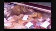 گربه ای که هزار دلار غذای دریایی را در یک وعده خورد!!!