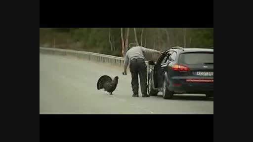 سوتی خفن حمله مرغ سیاه به گزارشگر !!!