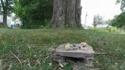 سنجاب بادام زمینی ها را به سرقت برد :O