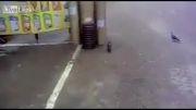 بدبخت گربه میخواست کباب بخوره خودش کباب شد!!!