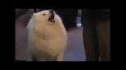 سگ ریاضیدان