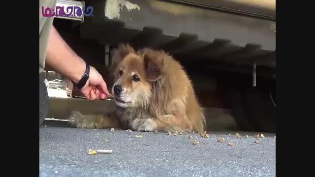 کمک به سگ ولگرد حیوانات فیلم کلیپ گلچین صفاسا