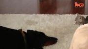 مریض ترین گربه دنیا(گربه نینجا)!!!