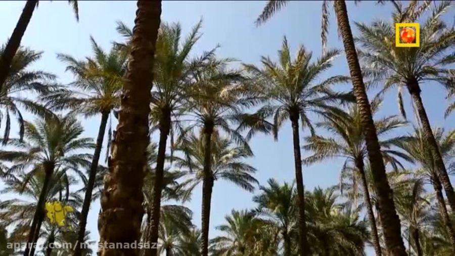 17 هزار هکتار نخلستان و نزدیک ترین نقطه جهان به خورشید!